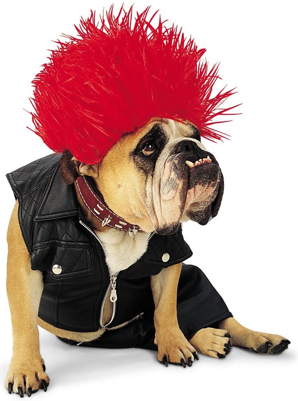 funny dog costumes - HD970×1306