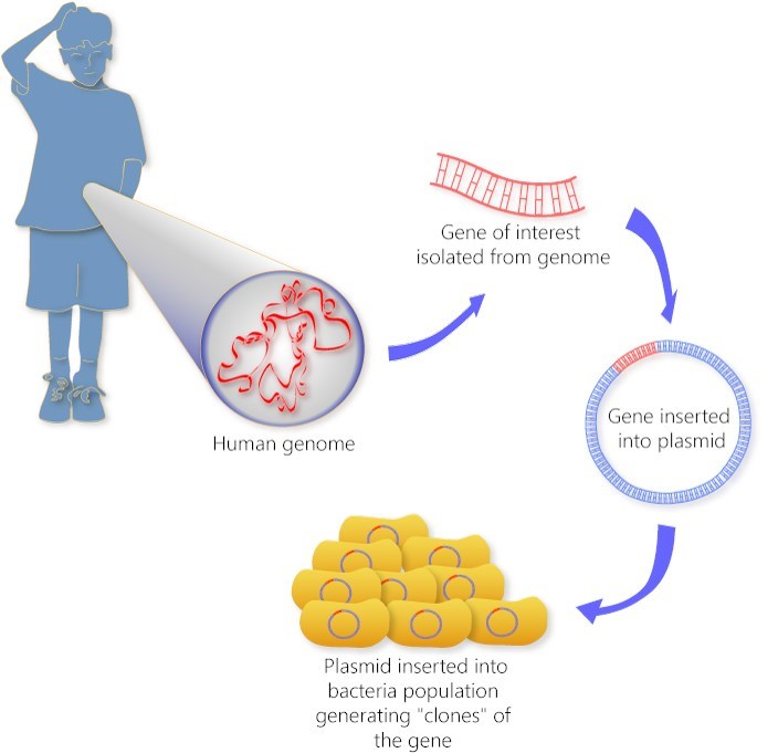 an analysis of the cloning in the modern world Cloning is the process of producing genetically identical individuals of an organism either naturally or artificially in nature, many organisms produce clones through asexual reproduction.