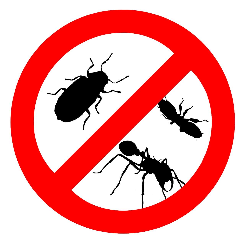 Предпосылками для появления тараканов является несоблюдение чистоты в помещении, а наличие открытых источников воды.