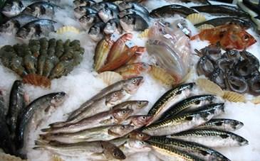 Mangez-vous régulièrement du poisson?  |  Toluna