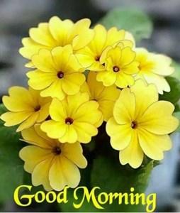 Good Morning Vs Good Night Toluna